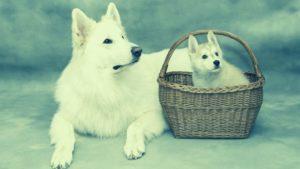 כלב וגור – כלבים בבית משותף